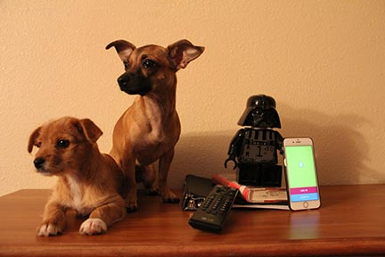 So many things keep teens awake, dogs, phones, homework, television, hunger.